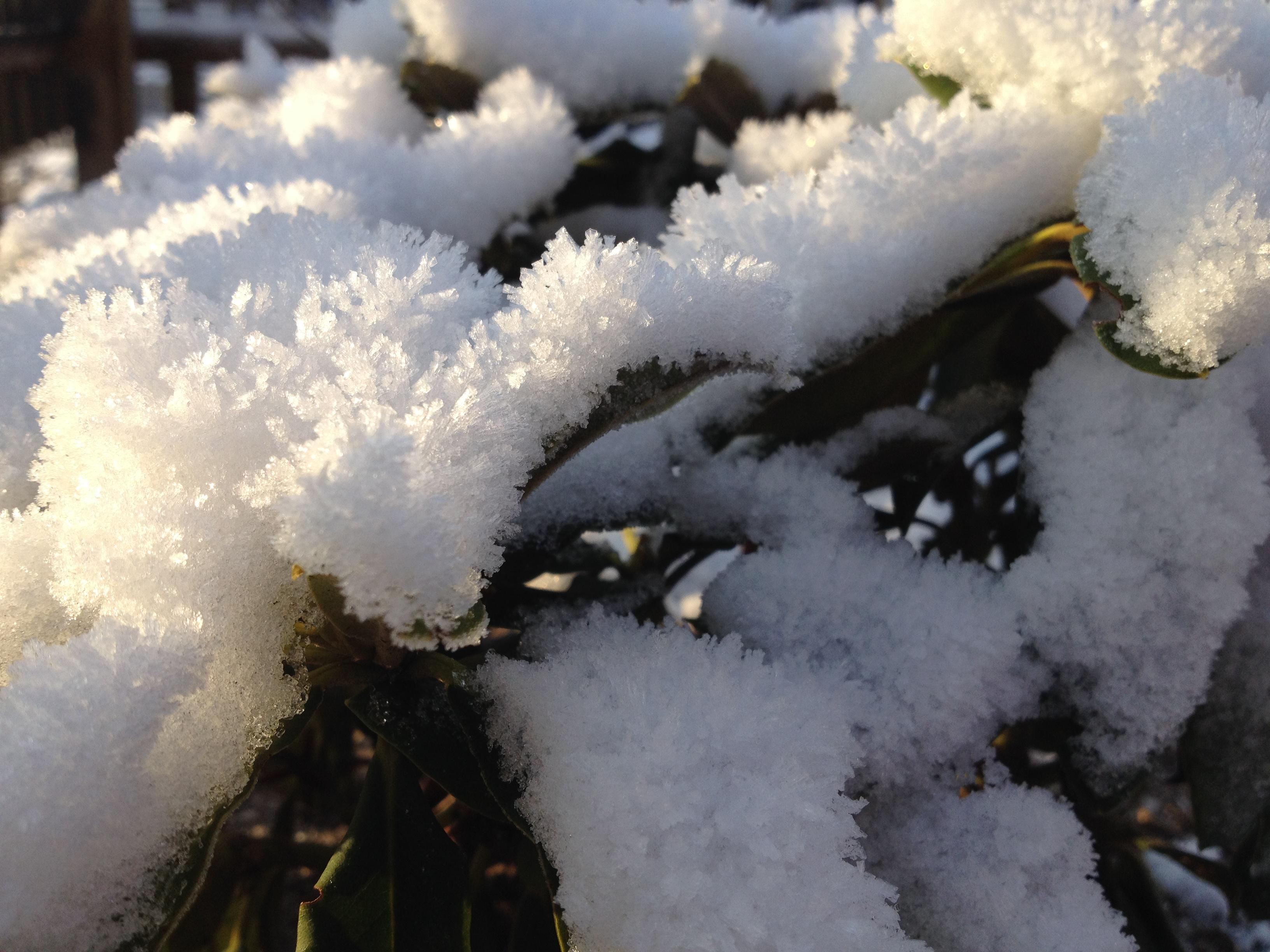 Sne på grene